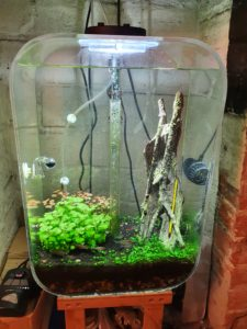 Tropical freshwater aquarium with lights on