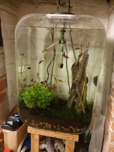 Tropical freshwater aquarium with lights off