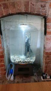 newly set up fireplace aquarium