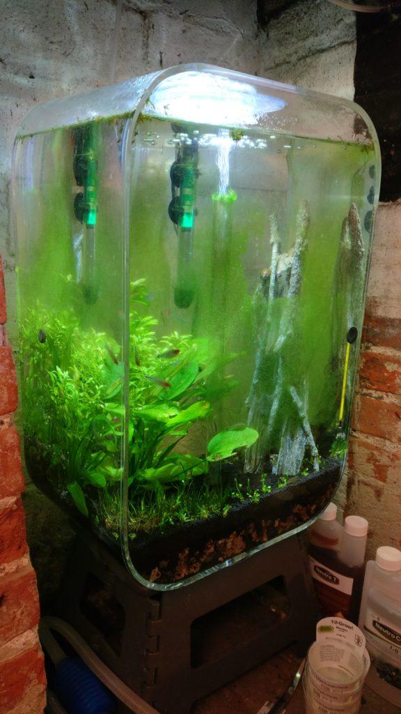 Green algae problem
