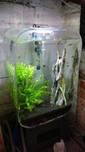Low tech tropical freshwater aquarium