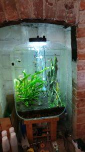 Echinodorus radicans submerged growth habit