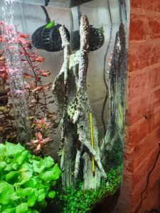 biOrb Amazonas root ornament