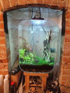 Aquarium after major plant trim