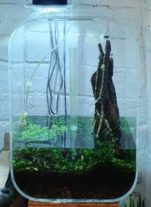 Ludwigia has been removed