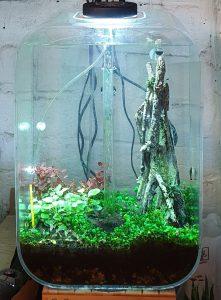 Aquarium as of 17-Apr-2021