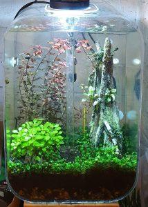 Aquarium with algae under control