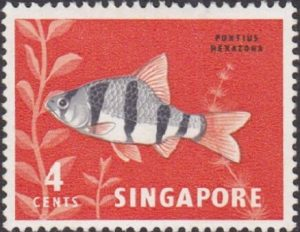 6-banded barb